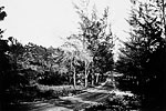 West Palmetto Park Road, 1920