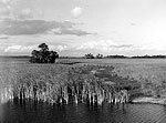 View from Tamiami Trail, Everglades, 1953
