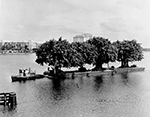 Banyan Tree Being Transported Across Lake Worth To Palm Beach, Palm Beach Florida, 1963